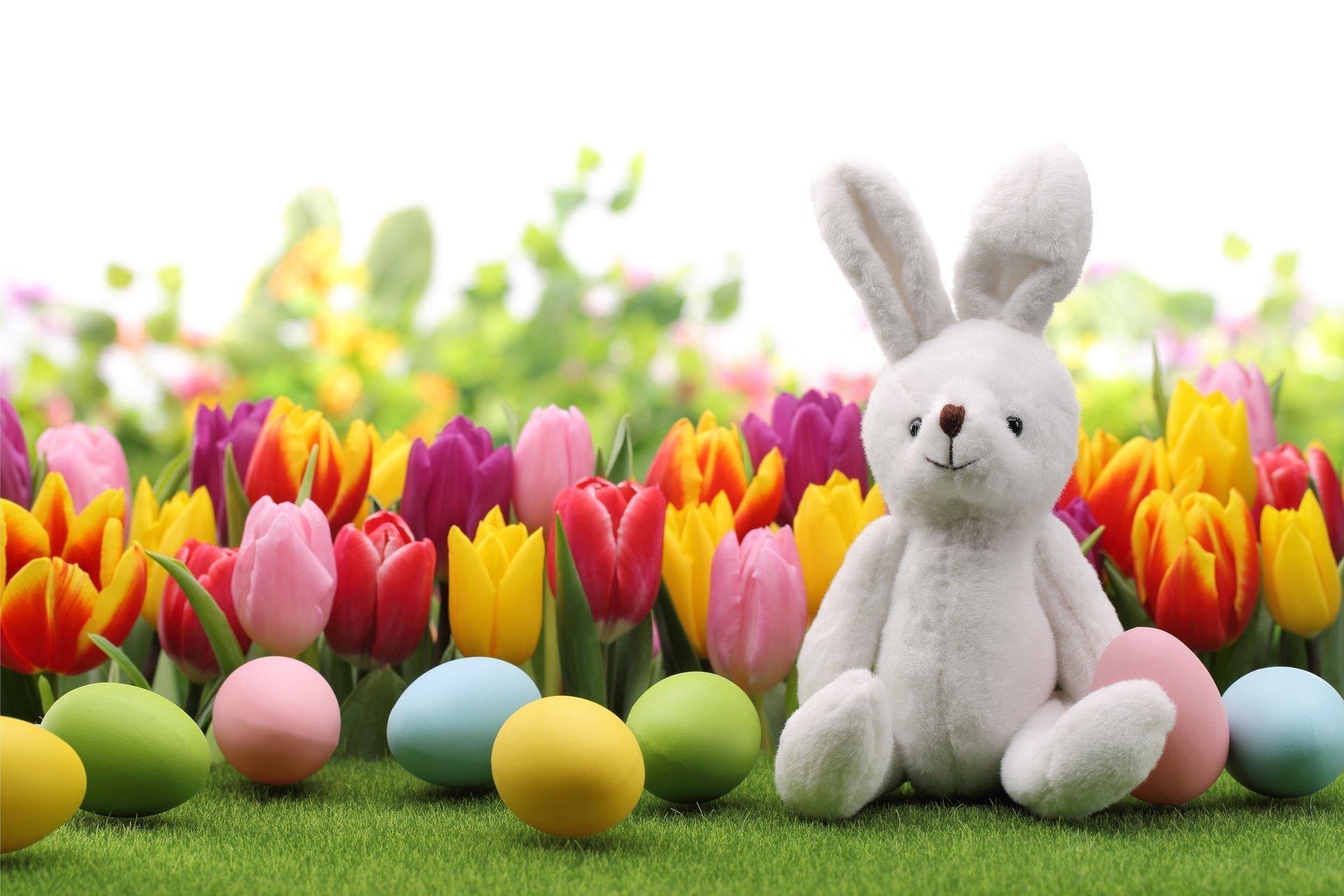 easter eggs spring flowers tulips bunny easter eggs rabbit 1920x1280