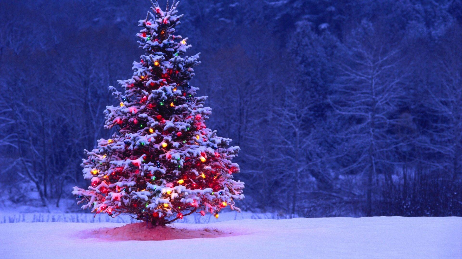46 Lighted Christmas Tree Wallpaper