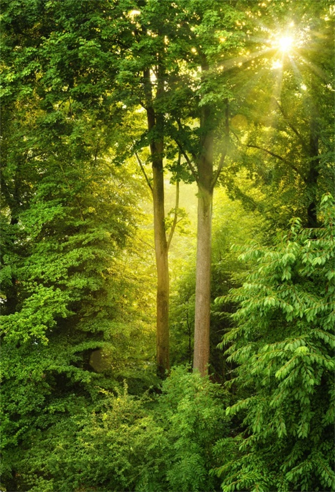 Laeacco Green Forest Mystic Trees Sunshine Portrait Photographic 681x1000