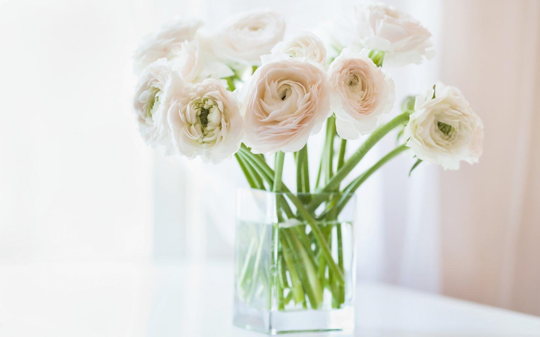 white flower wallpaper  wallpapersafari, Beautiful flower