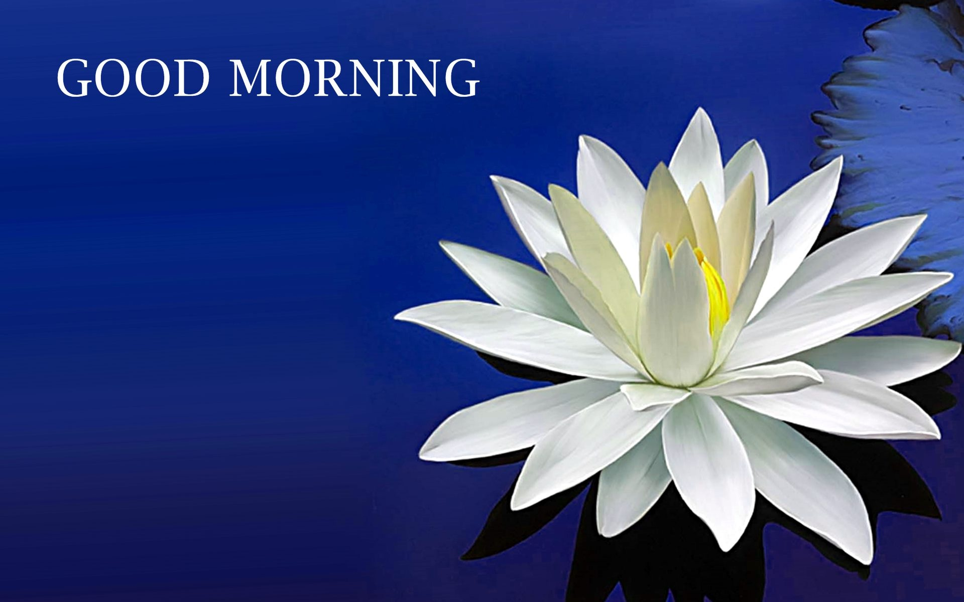 New Good Morning Wallpaper Wallpapersafari