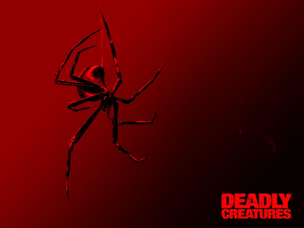 Black Widow Spider RNB wallpaper   ForWallpapercom 1024x768