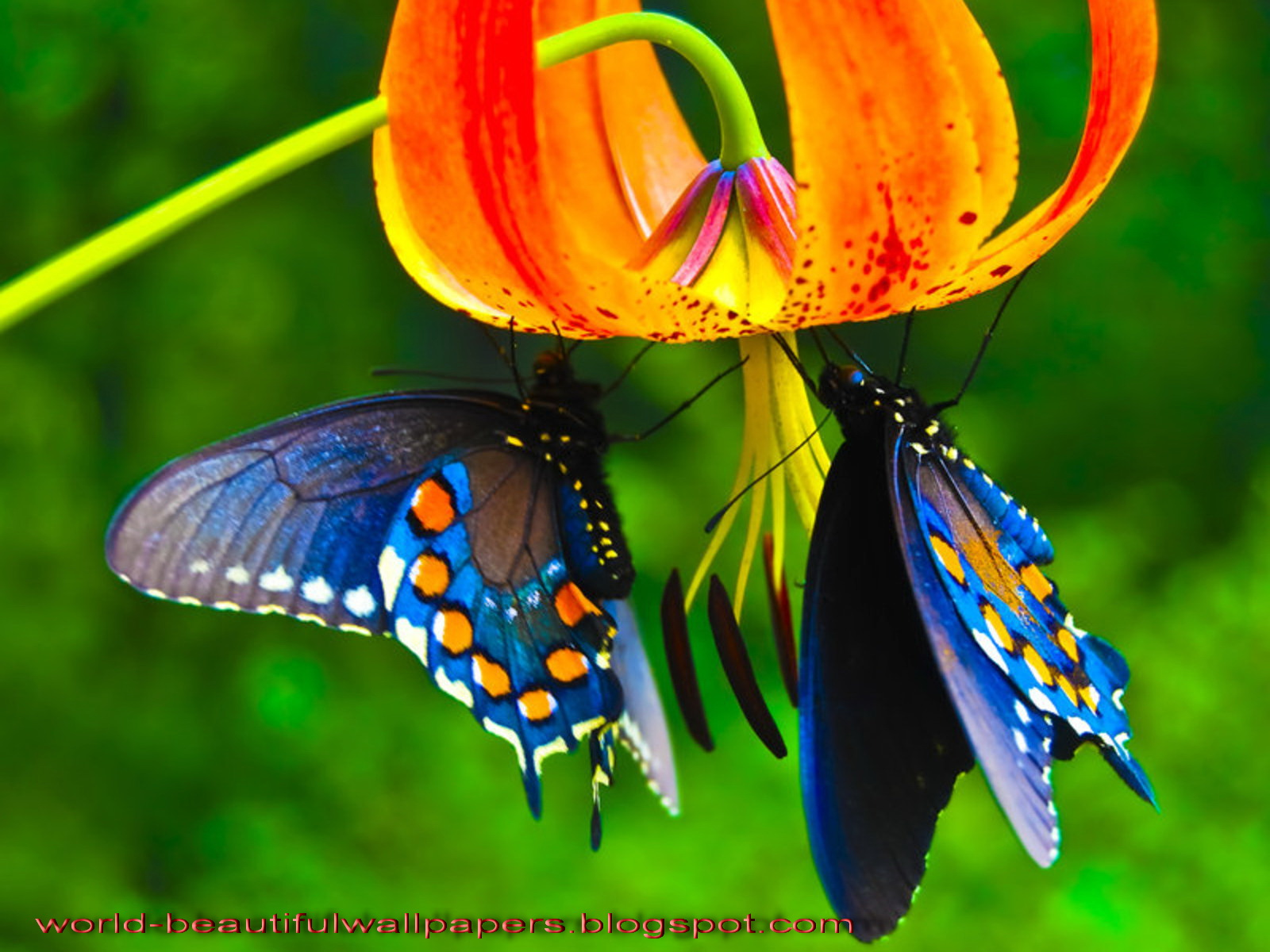 Beautiful Butterfly Wallpapers HD The Best Wallpapers 1600x1200