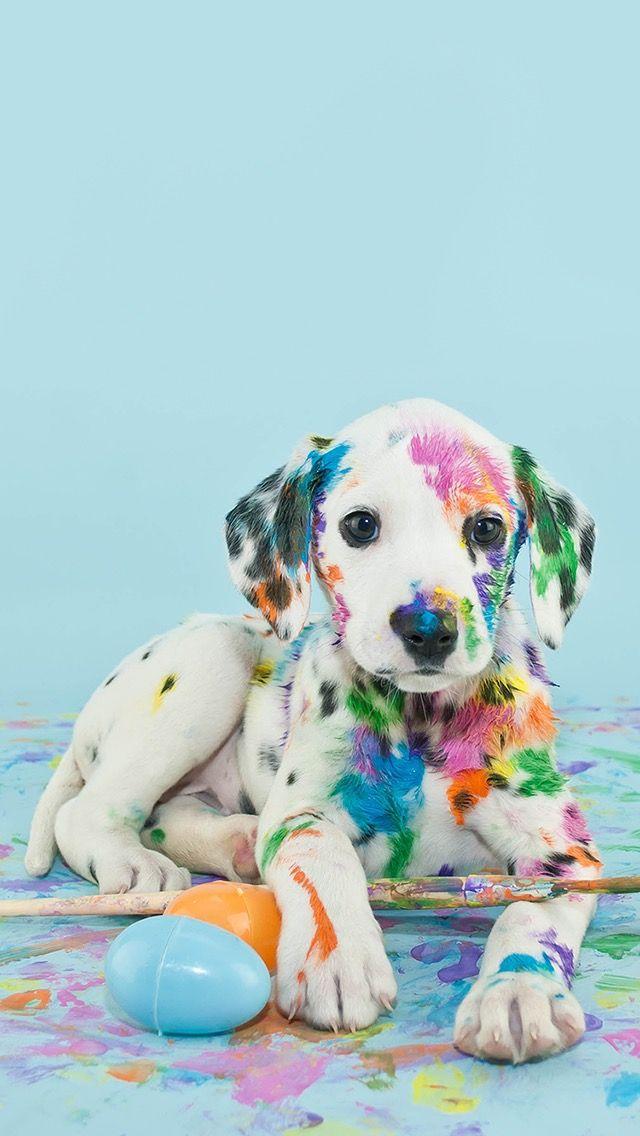Rainbow spotted Dalmatian puppy got into paint wallpaper tumblr 640x1136