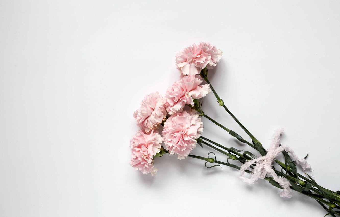 Wallpaper flowers pink wood pink carnation flowers images for 1332x850