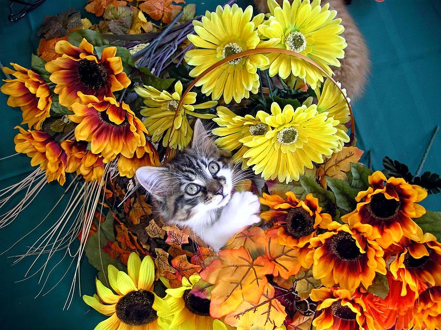 cat eye kittenfree hdwallpaperscomwallpapersanimals548175jpg 900x673