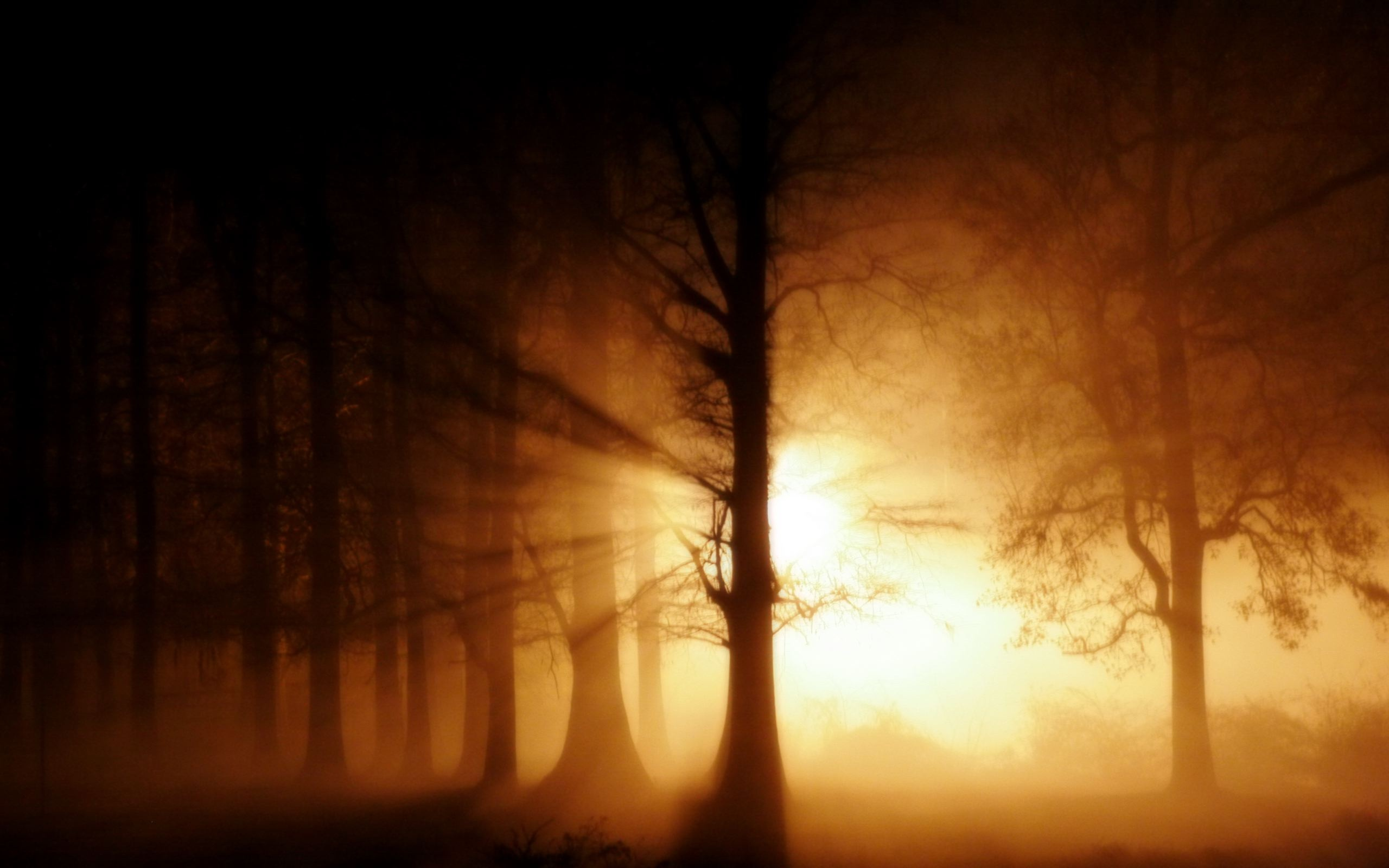 Foggy Forest Wallpaper by Amystikal   HQ Wallpapers download 100 2560x1600