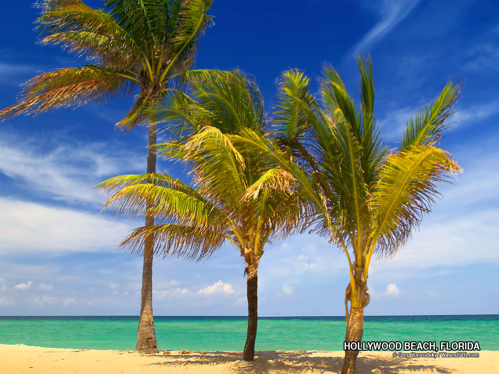 FLORIDA BEACHES FLORIDA BEACH PHOTO FREE Desktop background 1024x768