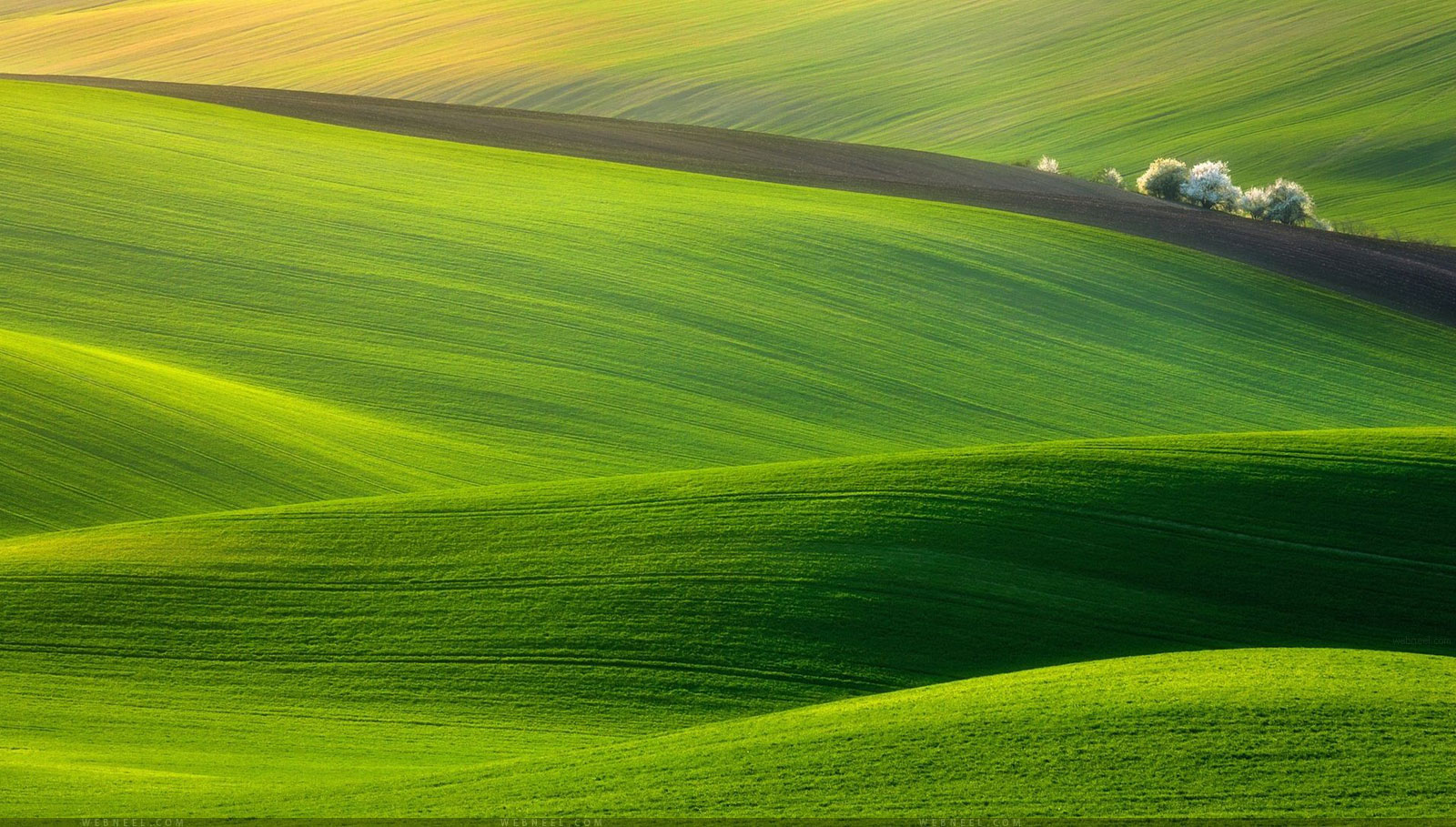 50 Beautiful Nature Wallpapers for your Desktop Mobile and Tablet   HD 1600x909