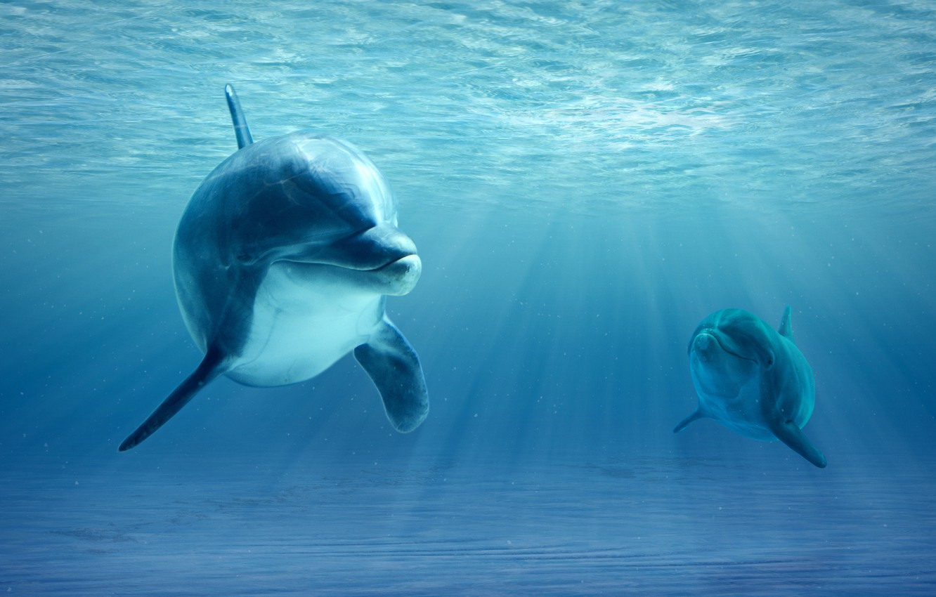Wallpaper ocean realism dolphins images for desktop section 1332x850