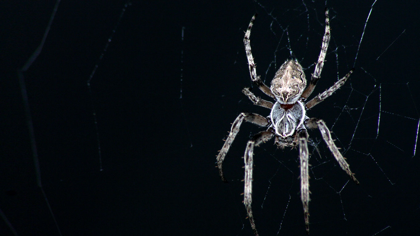 Scary Spider Wallpaper - WallpaperSafari