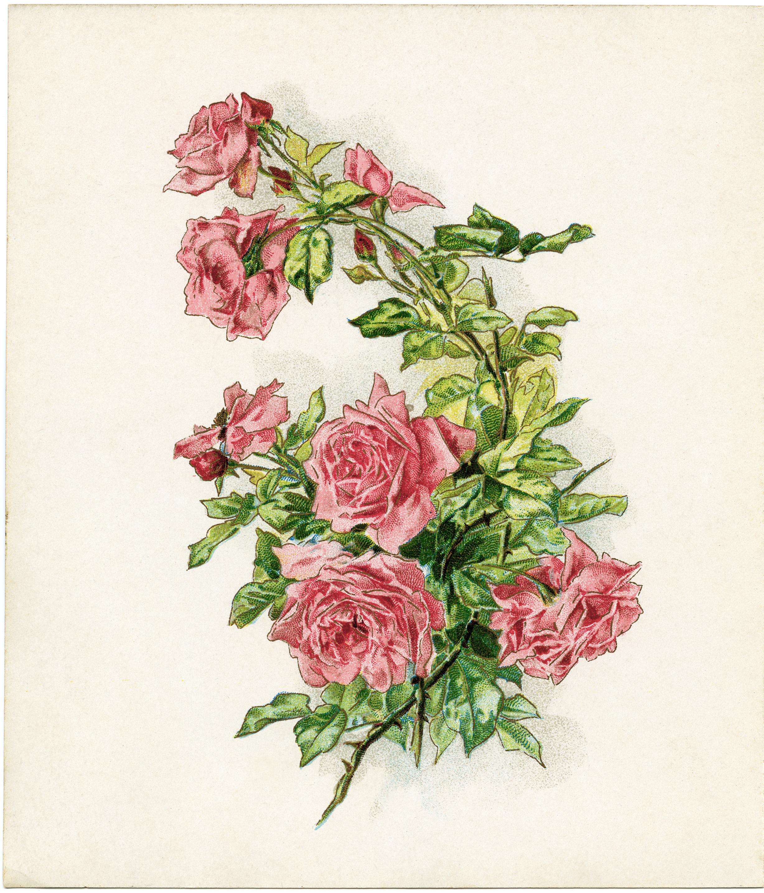 vintage rose background Images, Stock Photos & Vectors ...