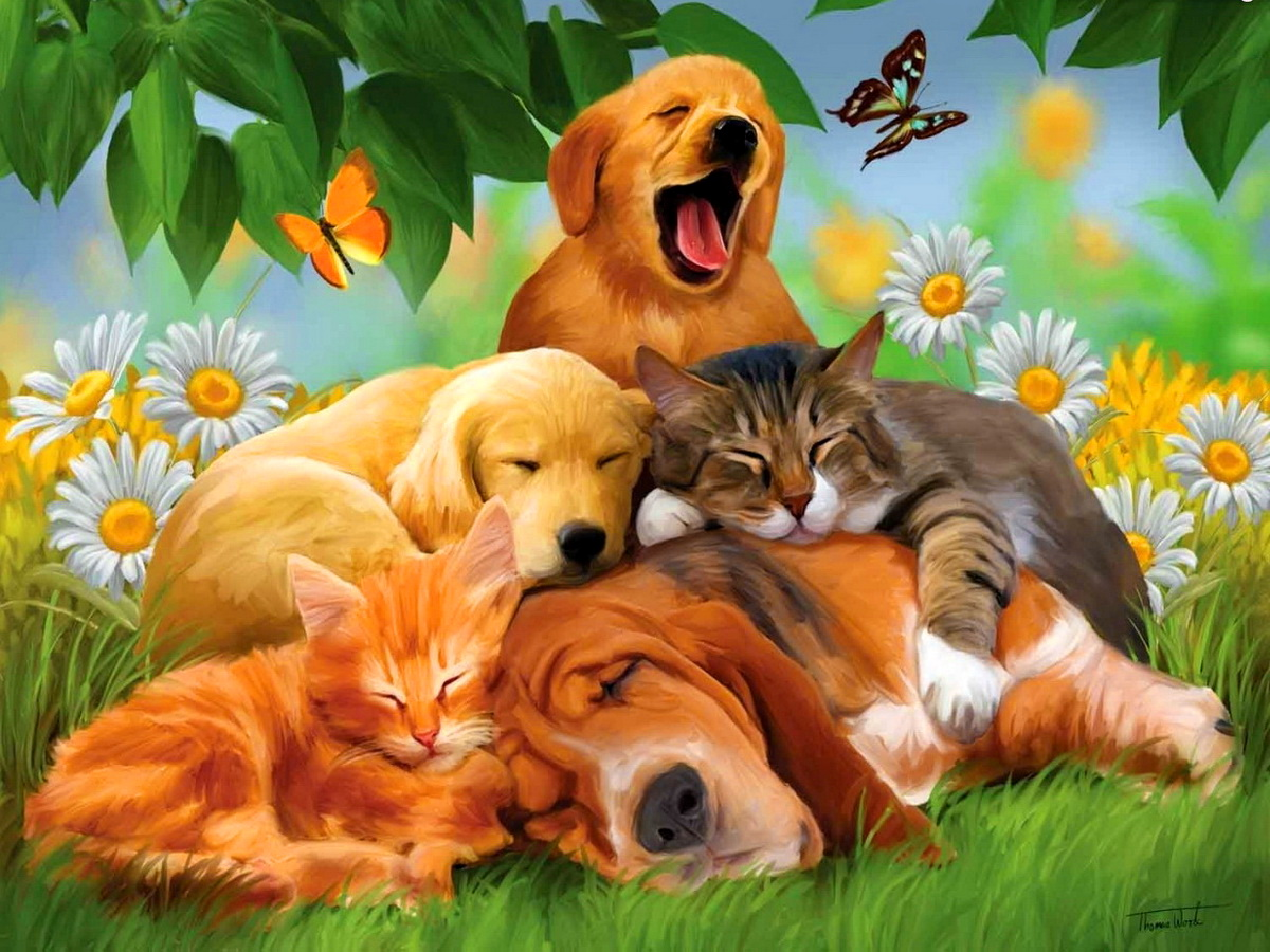 Free Download Cool Animals Dogs Cats Desktop Hd Wallpaper Stylish Hd Wallpapers 1200x900 For Your Desktop Mobile Tablet Explore 46 Cats Dogs Wallpaper Desktop Wallpaper Crazy Cats And Dogs