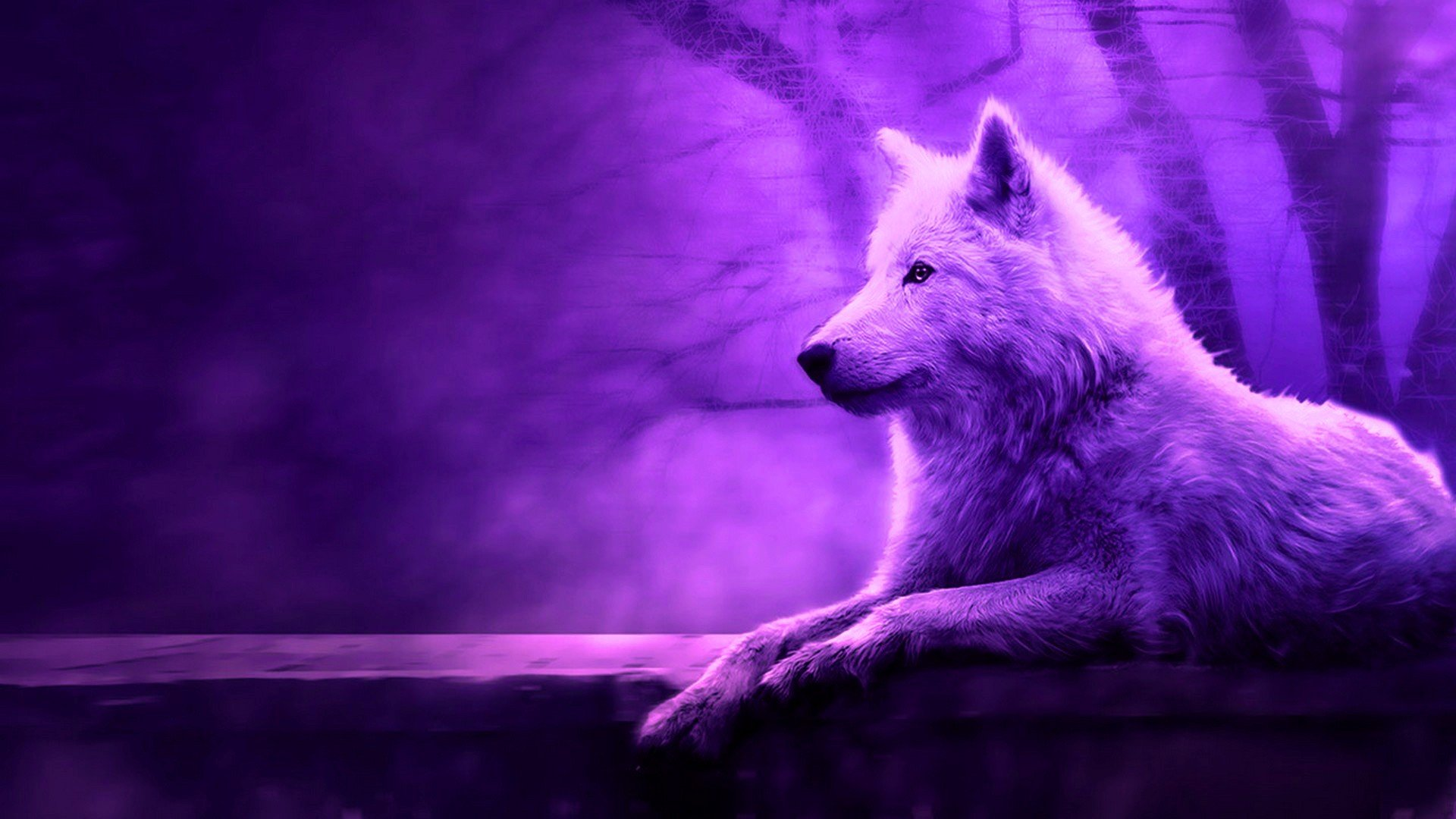 Cool Wolf HD Backgrounds 2021 Live Wallpaper HD 1920x1080