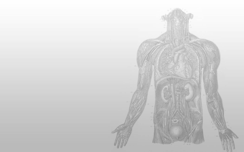 Anatomy Biology 1440900 Wallpaper 608583 1440x900