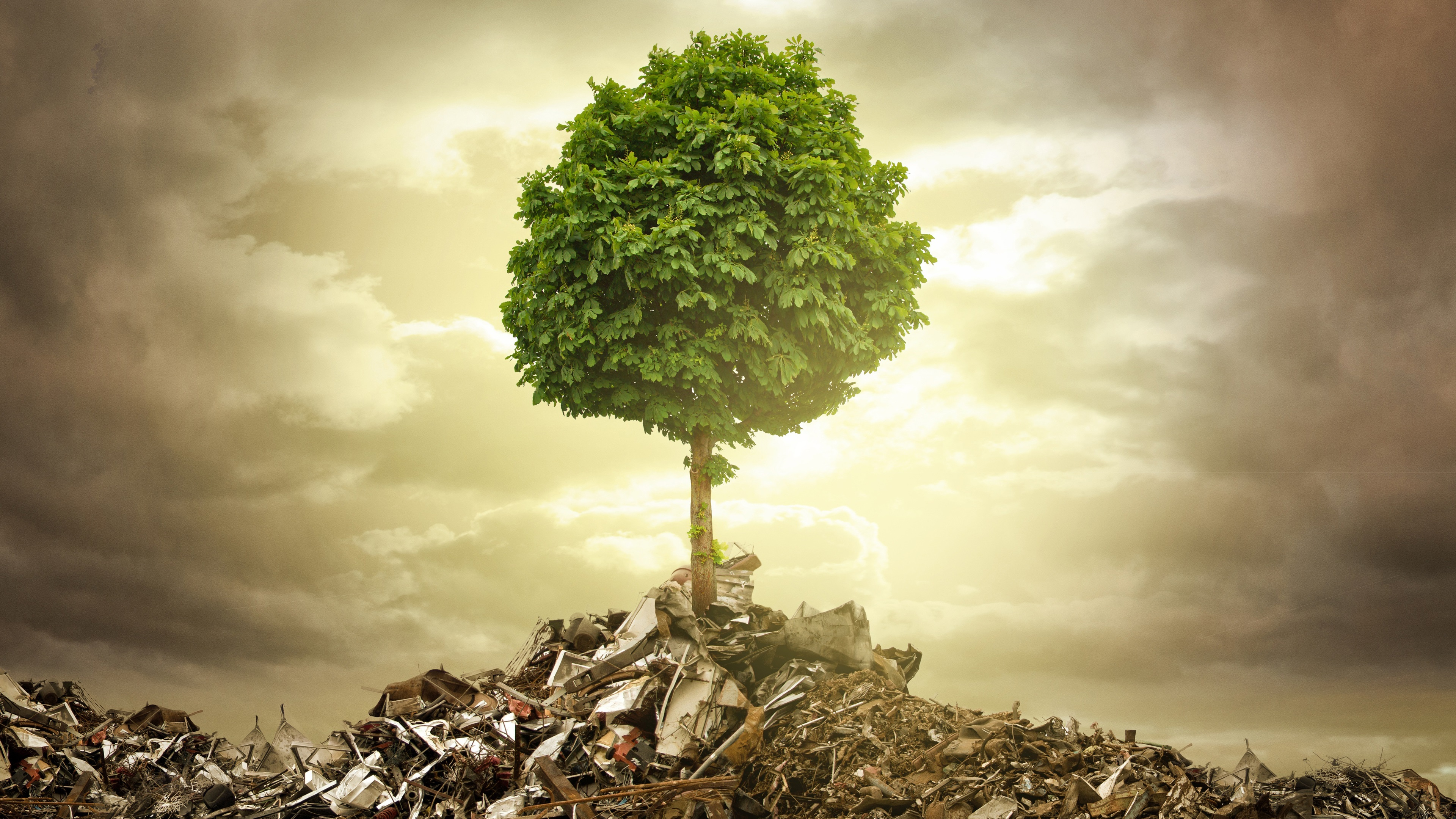 Wallpaper Single tree garbage wreckage 3840x2160 UHD 4K Picture 3840x2160