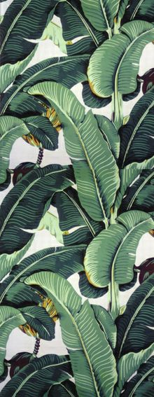 tropical leaves Wallpaper Wallpaper Pinterest 220x567