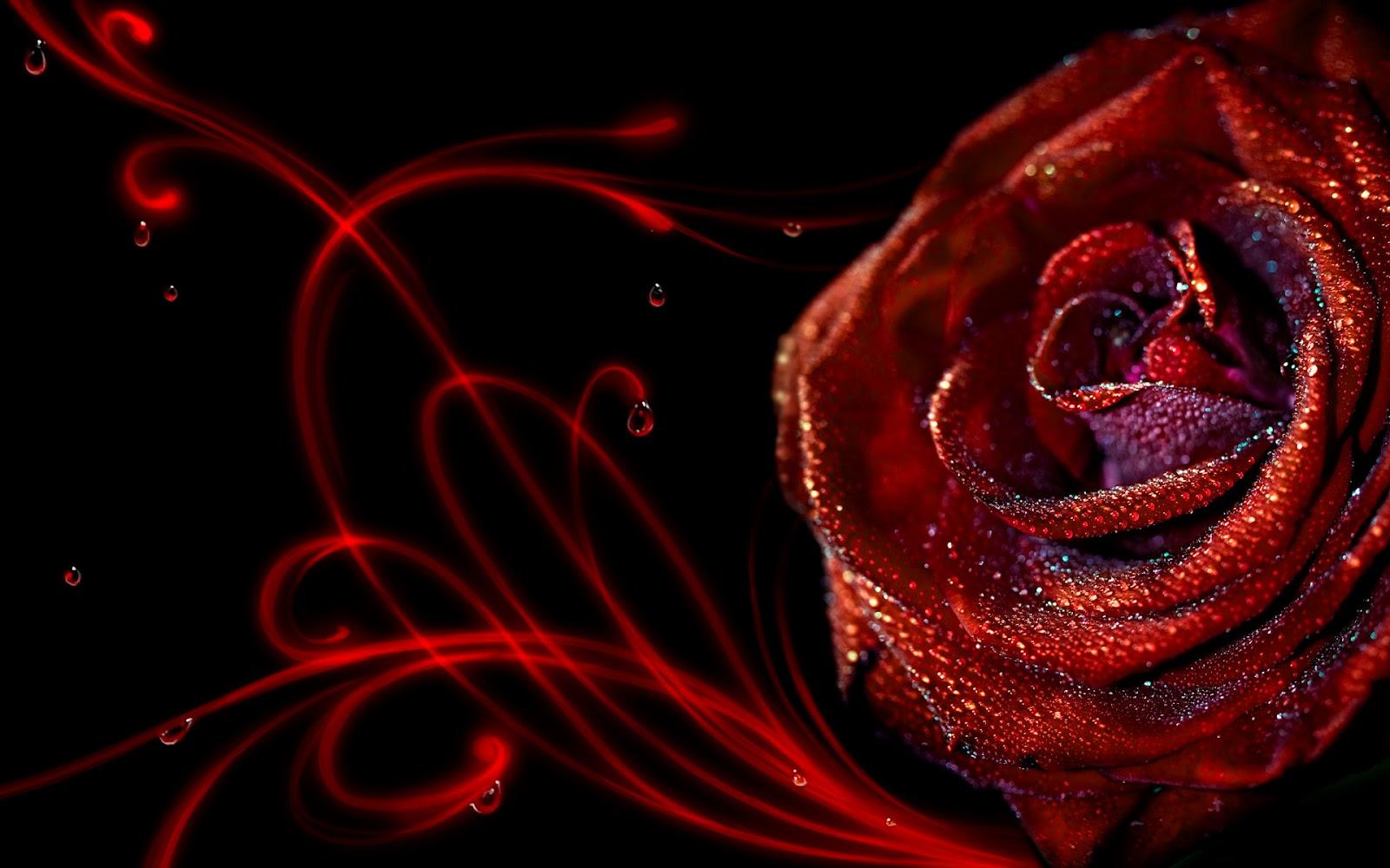 Elegant Red Roses Wallpaper HD wallpaper   Elegant Red Roses Wallpaper 1600x1000