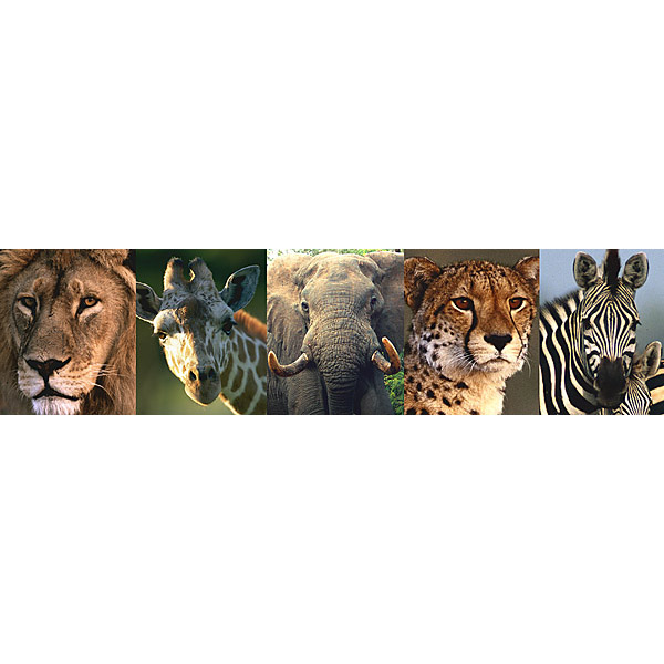 Safari Animal Border   Jungle Greats   Brewster Wallpaper   NGB94603 600x600