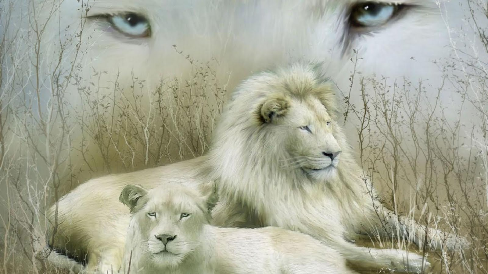 White Lion Roar Wallpaper image gallery 1600x900