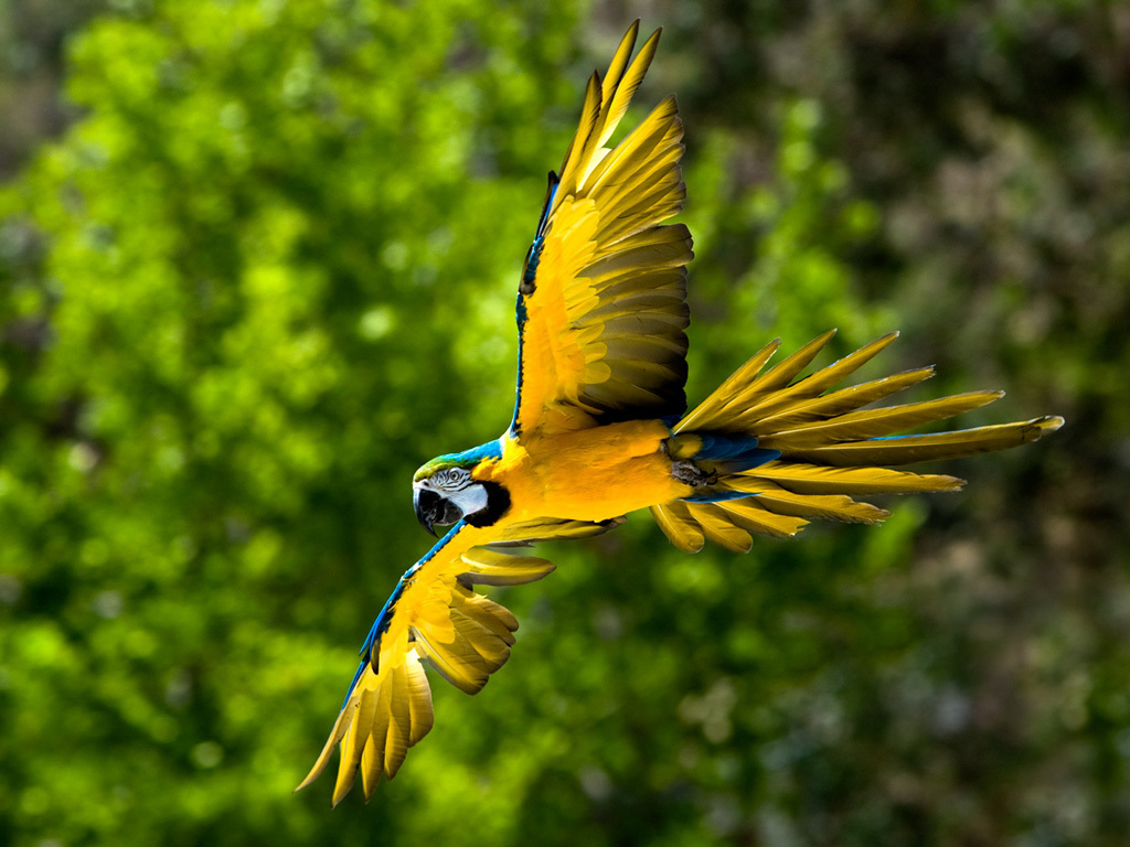catsparrots and butterflies images Blue and yellow Macaw wallpaper 1024x768