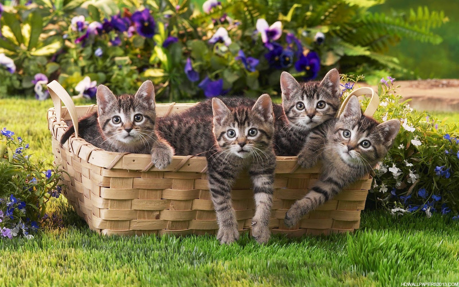 cats wallpaper download hd wallpapers cats wallpaper 1600x1000