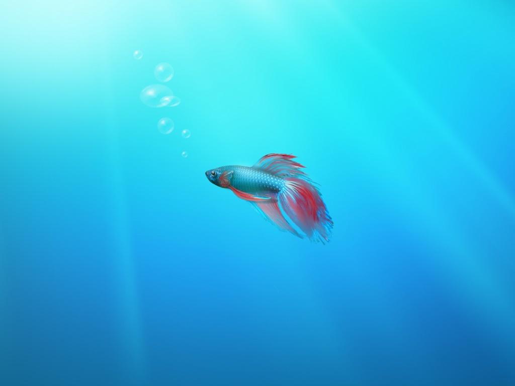 Windows 7 Beta Fish Wallpaper   iPad iPhone HD Wallpaper 1024x768