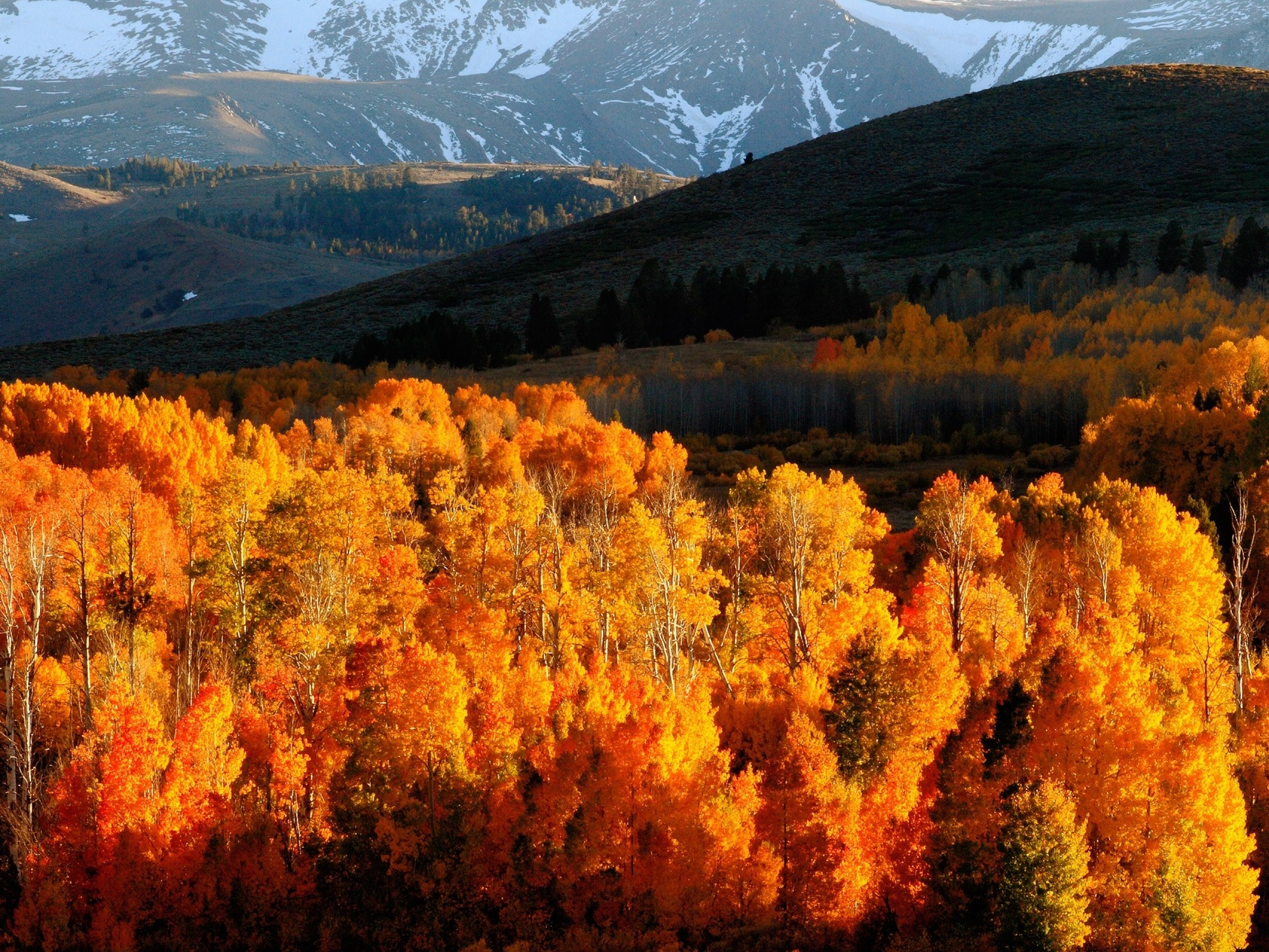 Autumn Forest Hills Snow wallpapers Autumn Forest Hills Snow 2560x1920