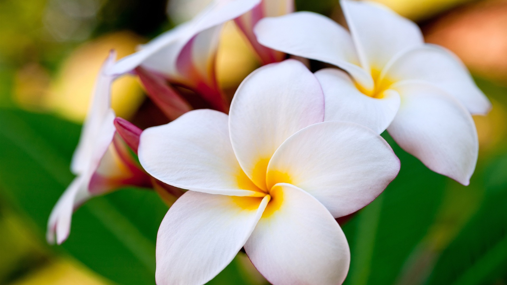 Hawaiian Flower Photos Savingourboysfo
