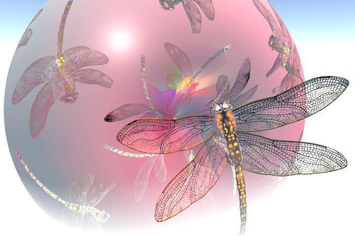 Pink Fairy dragonfly Dragonflies Pinterest 720x480