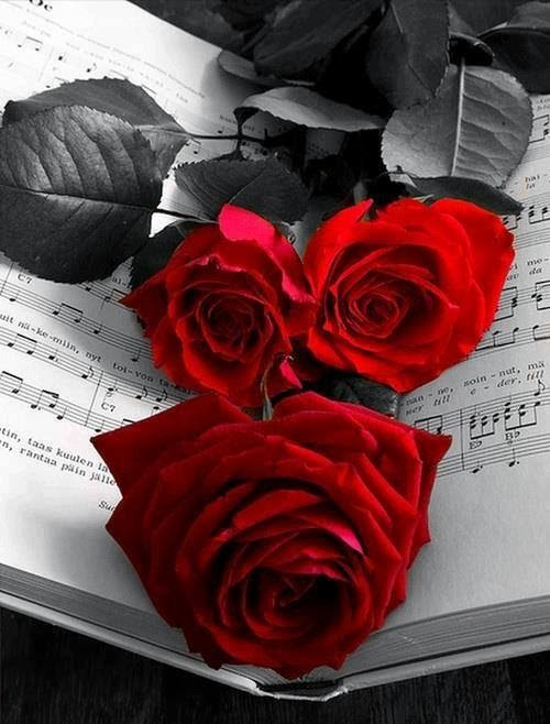 Download Black And White Red Rose Image 500x658 77 Black And