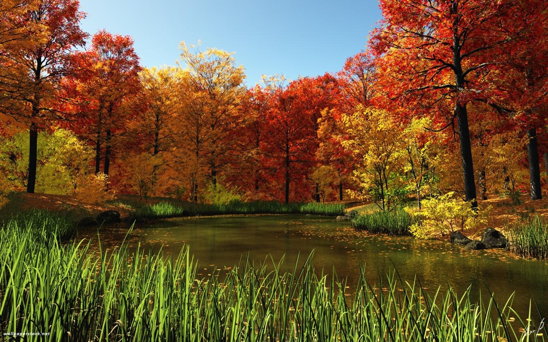 1440x900 Fall Pond desktop PC and Mac wallpaper 1440x900