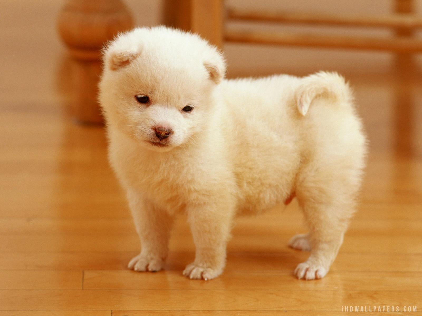 Description Download Cute Puppy WallpaperBackground in 1600x1200 HD 1600x1200