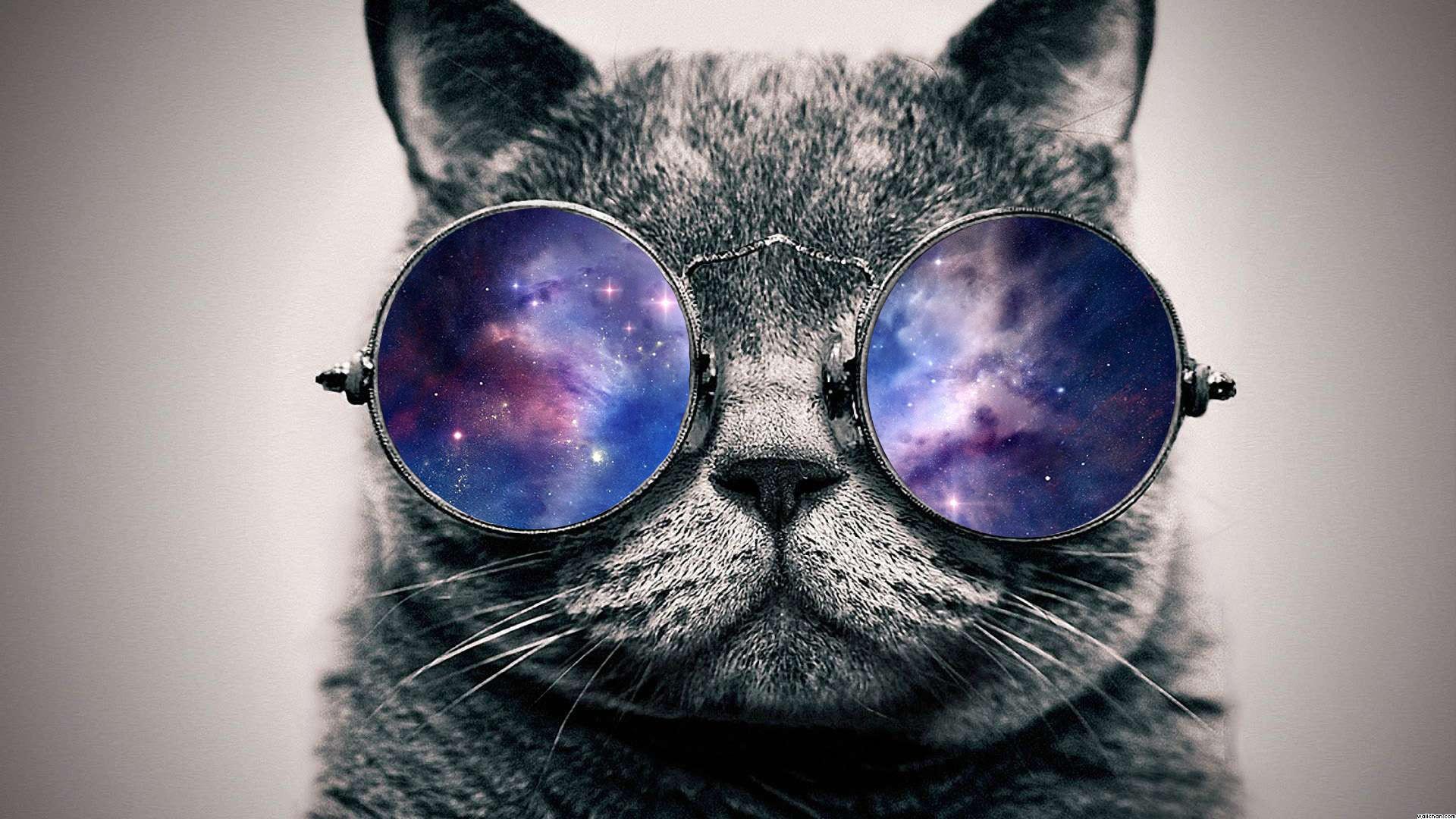39 Cats Unicorns And Galaxies Wallpaper On Wallpapersafari