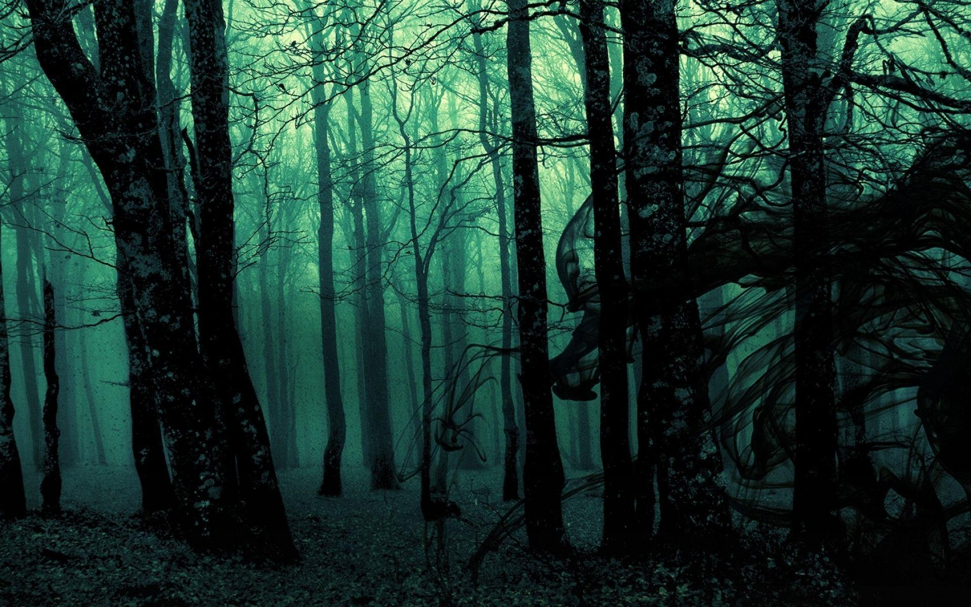 Dark Forest Backgrounds 1920x1200