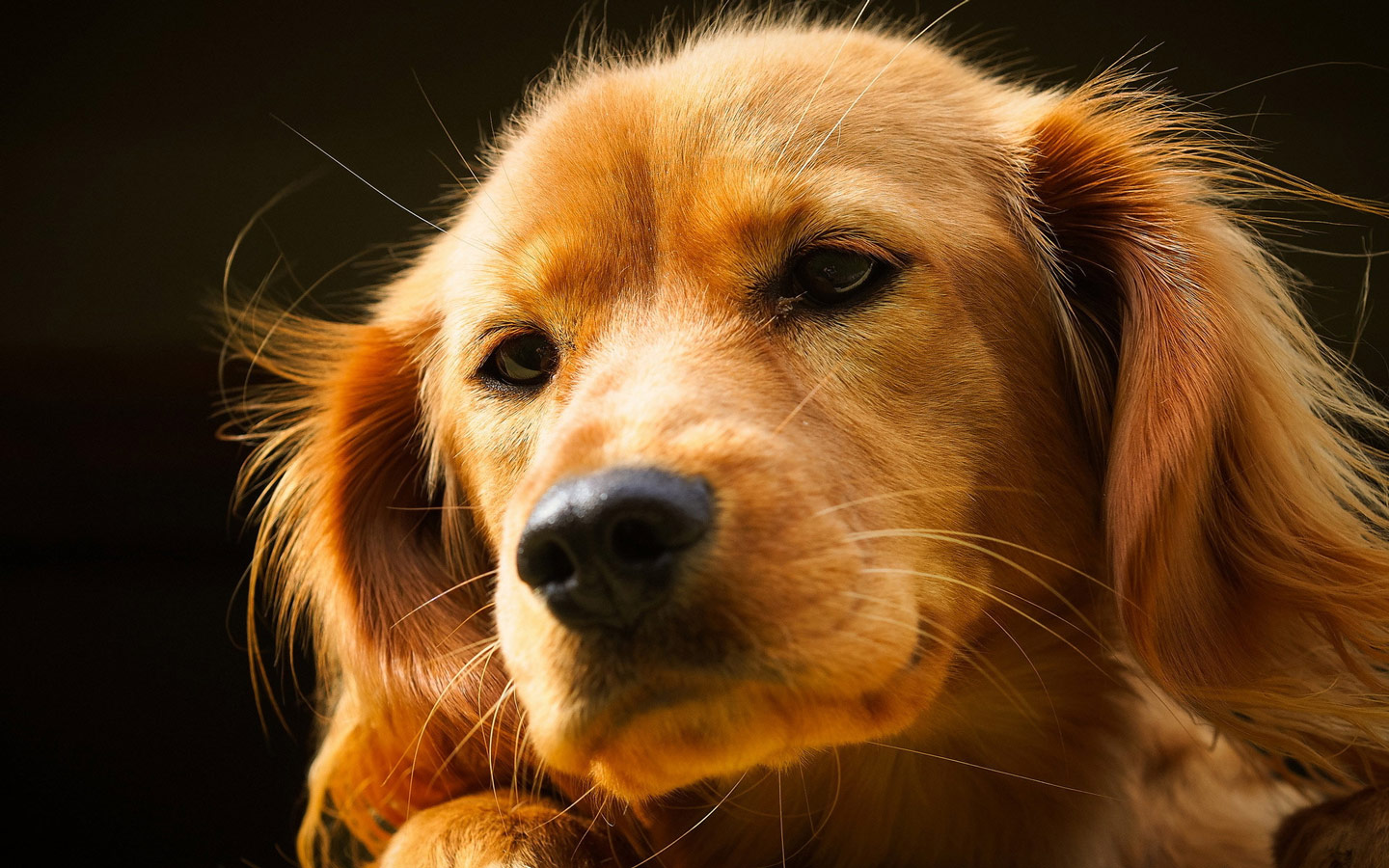 Cute Dogs Wallpapers For Desktop Puppy Backgrounds 1440x900