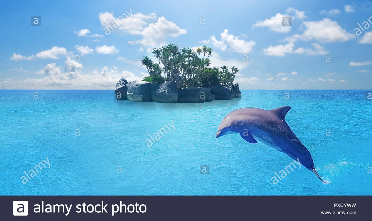 Dolphins swimmingjumping on blue ocean cloudmarine wildlife 1300x772