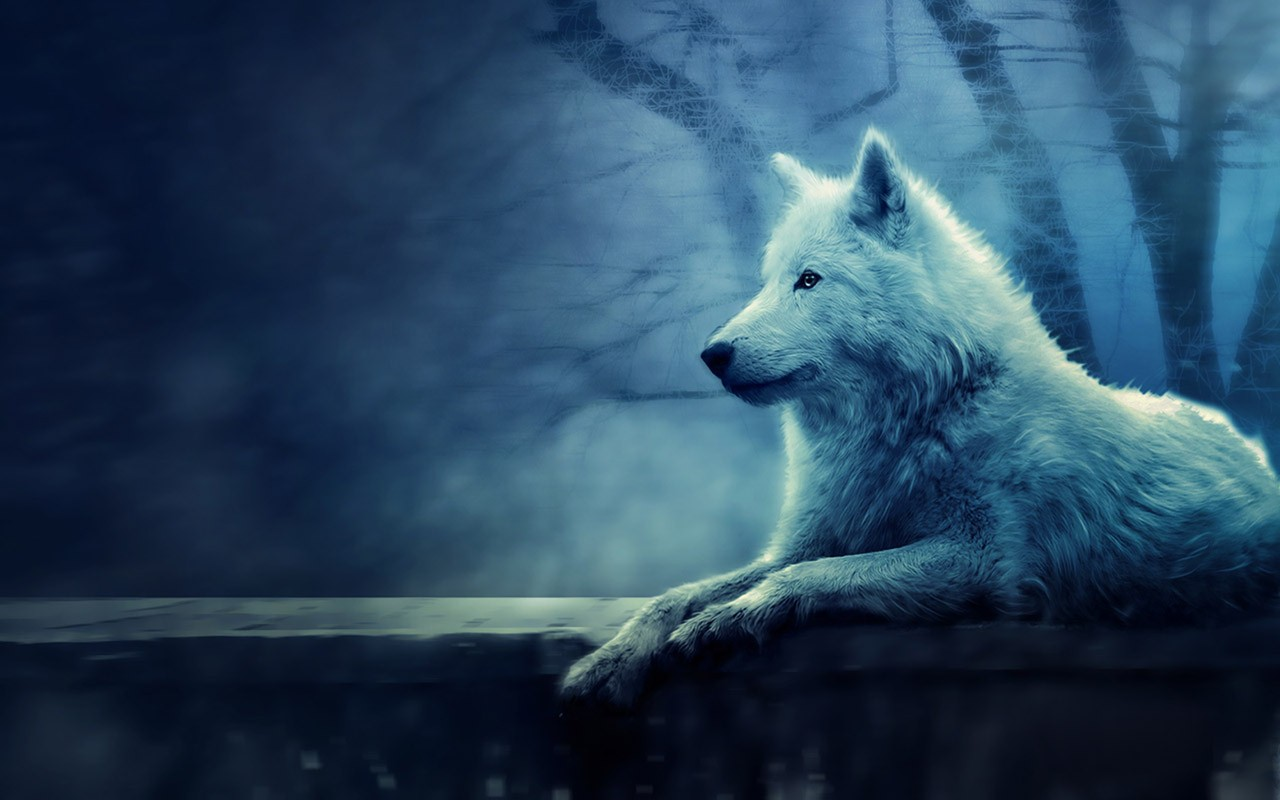 Hd Wolf Backgrounds: HD Wolf Wallpapers 1080p