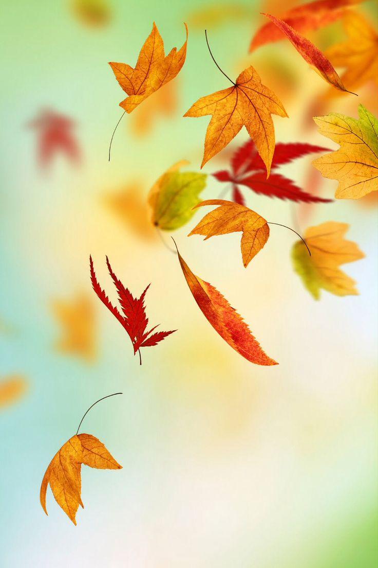 Fall IPhone Wallpapers WallpaperSafari
