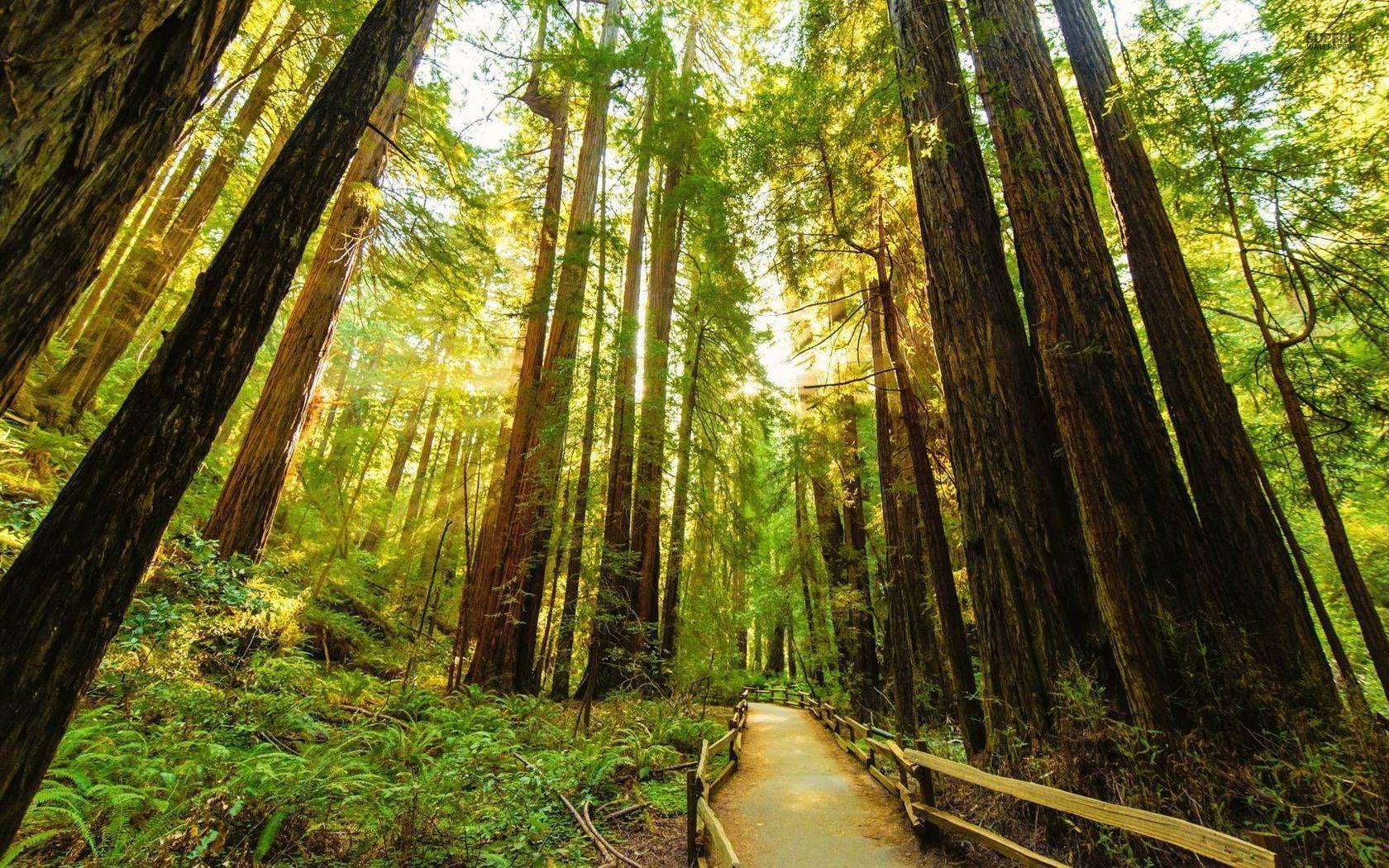 Redwood Desktop Wallpapers   Top Redwood Desktop Backgrounds 1680x1050