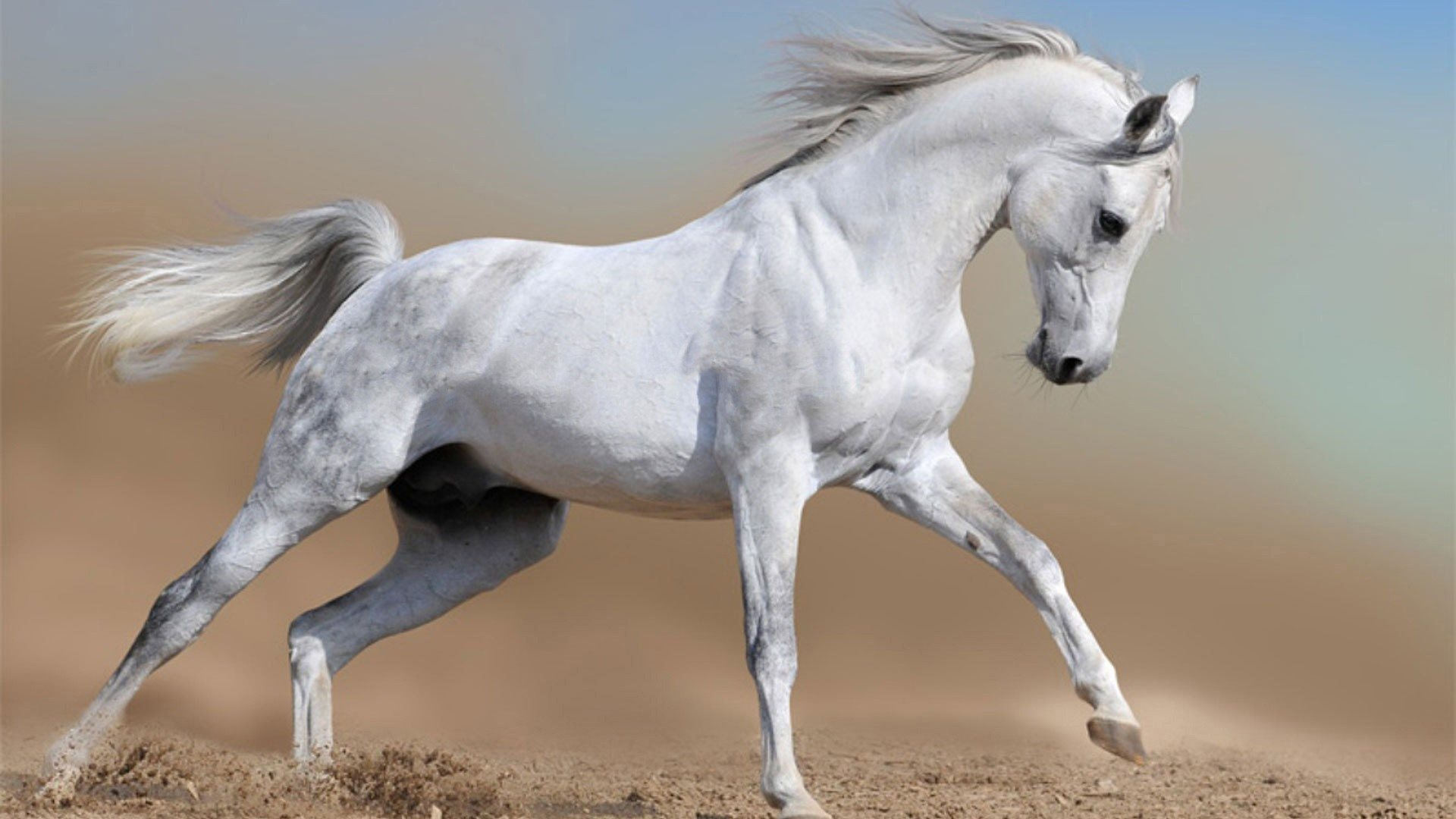 download horses desktop wallpaper which is under the horse wallpapers 1920x1080