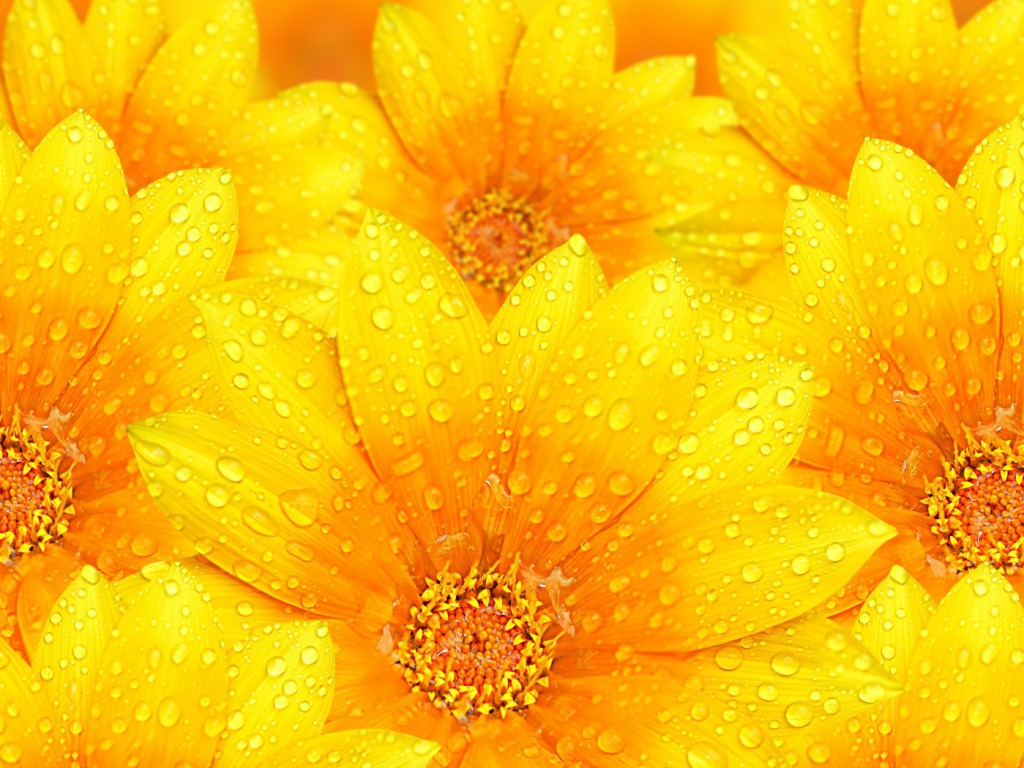 Free Download Yellow Flowers Wallpapers Hd Pictures One Hd