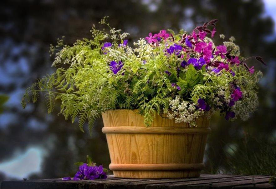 Flower Pot Wallpaper Wallpapersafari