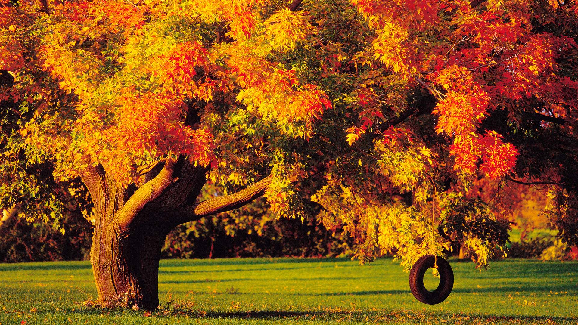 Autumn Tree Wallpaper 61 Images: Fall Trees Wallpaper