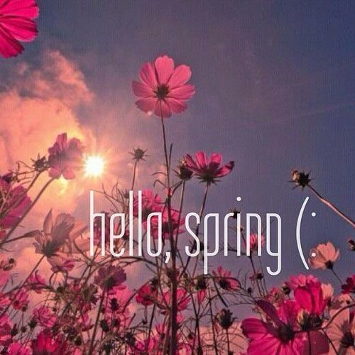 Hello spring on We Heart It   httpweheartitcomentry 500x500
