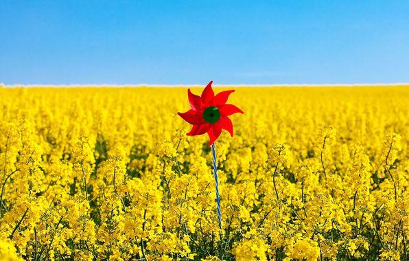 hd wallpapers mood nature pinwheel red sky wallpaper widescreen yellow 596x380