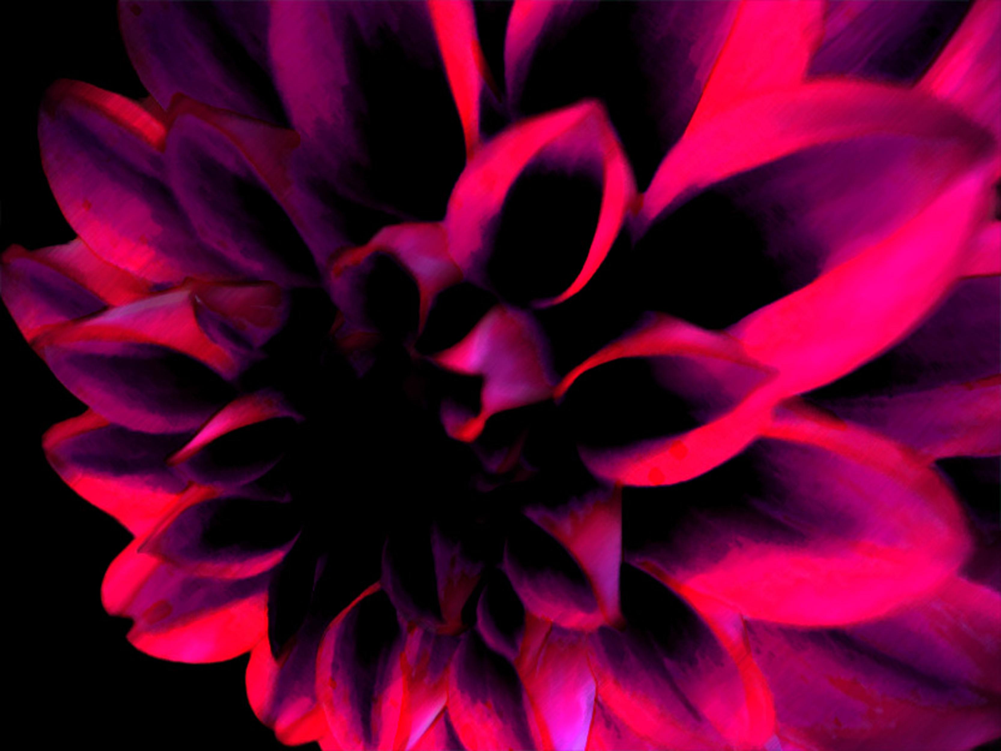 dark pink flower by Hanna H   Desktop Wallpaper 3333x2500