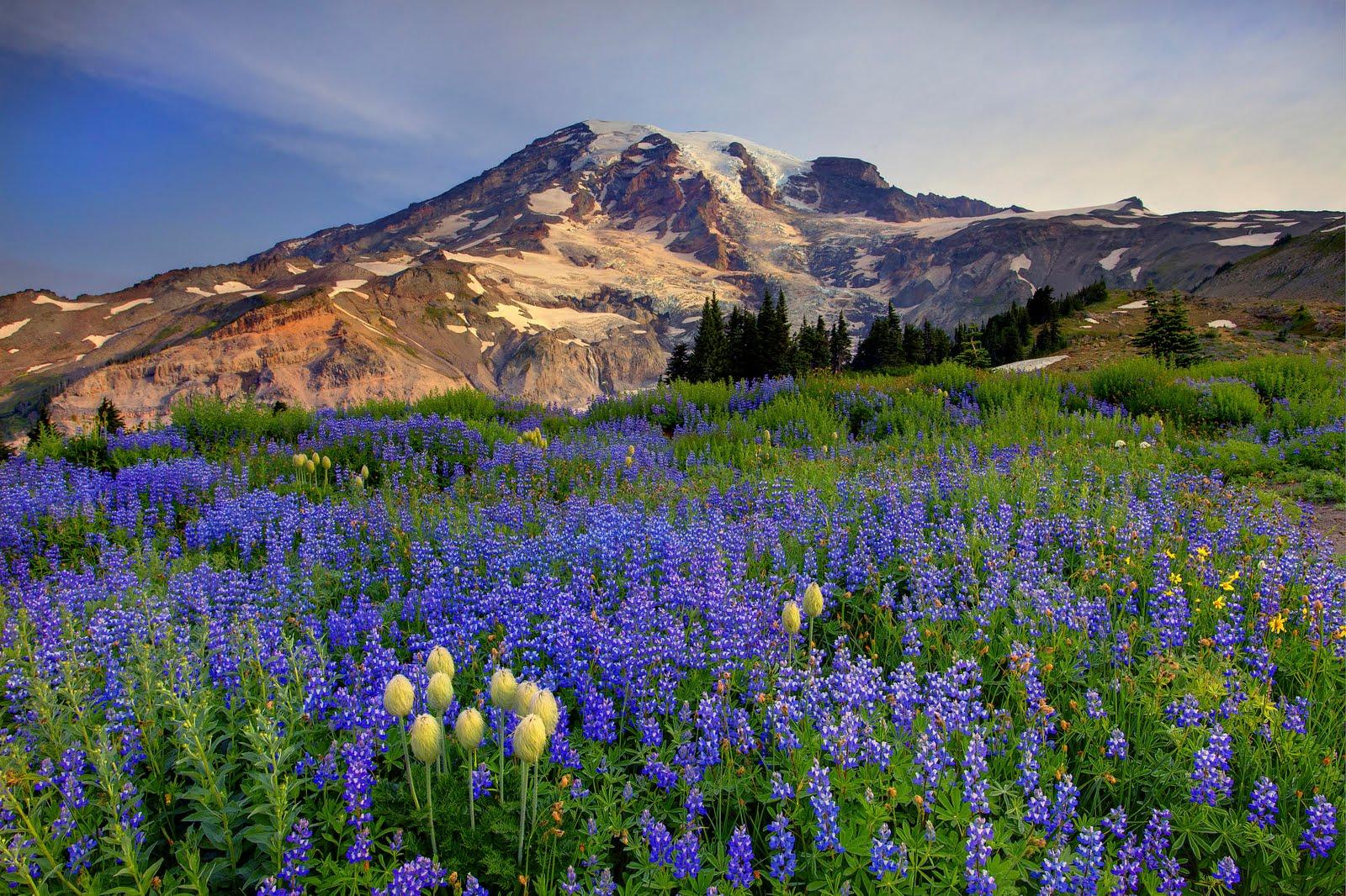 Mount Rainier Washington   Hd Backgrounds Hd Desktop 1600x1066
