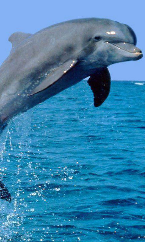 Dolphins HD Live Wallpapers Live wallpapers HD for Android 480x800
