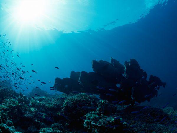 Underwater Landscape Photos Underwater Wallpapers Download Photos 600x450
